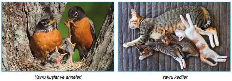 hayvanlarda eşeyli üreme