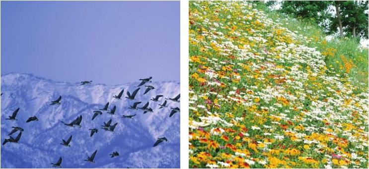 kaç tane kuş ve çiçek türü var
