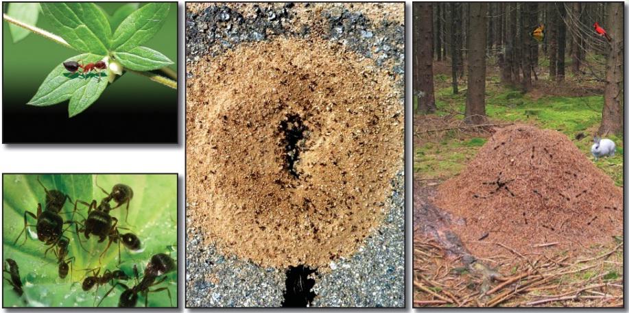karıncaların doğal dünyası