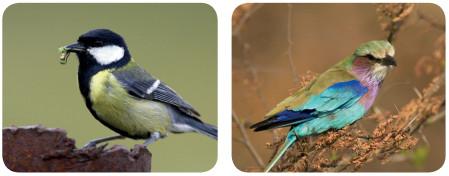 kuşlar örnekleri