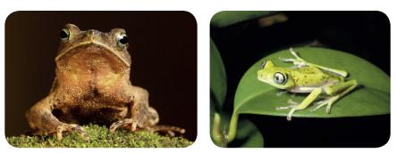 kurbağa örnekleri