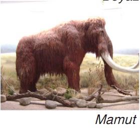 nesli tükenen mamut