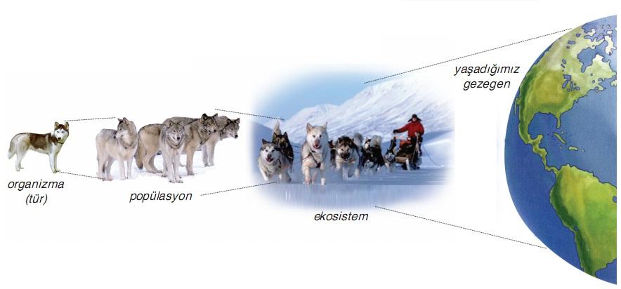 popülasyondan ekosisteme