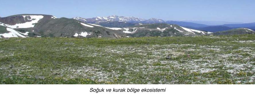soğuk ve kurak bölge ekosistemi