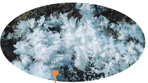 krağı kırç resimi