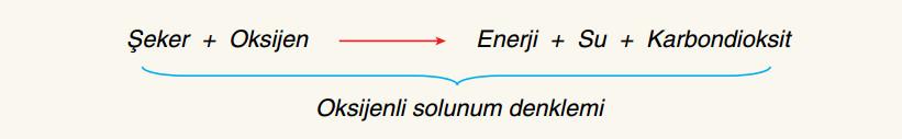 oksijenli solunum linki