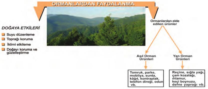 ormanlardan faydalanma şekli
