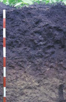 vertisol topraklar